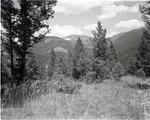 """Willard A. """"Montana Bill"""" Hartley Reminiscence"""