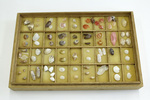 Box of Shells